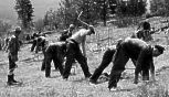 Civilian Conservation Corps  busy-work for single men.
